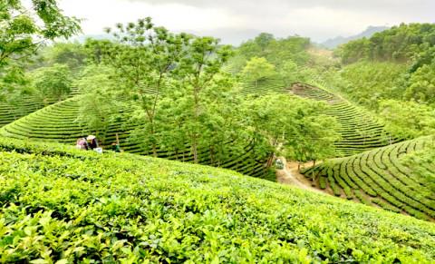 Sơn Dương (Tuyên Quang): Sản phẩm OCOP nâng cao chất lượng tìm hướng đi riêng