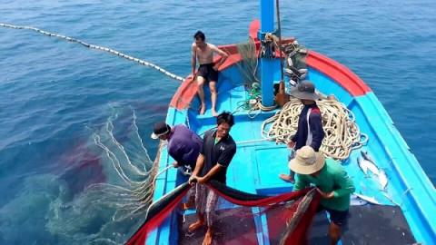 Quyết liệt xử phạt các đối tượng vi phạm khai thác hải sản bất hợp pháp và không khai báo theo quy định