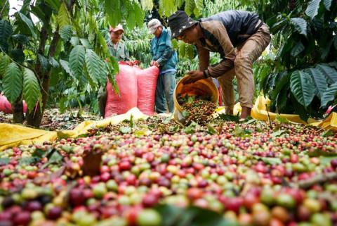 Nỗ lực đưa nông sản Tây Nguyên đến thị trường quốc tế