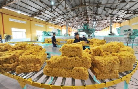 Thị trường Hoa Kỳ tiếp tục tăng nhập khẩu cao su của Việt Nam