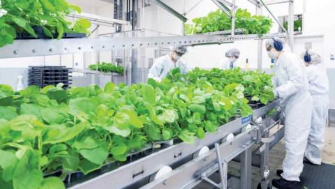Nhà sản xuất thuốc Mitsubishi Tanabe đưa vắc xin COVID-19 có nguồn gốc thực vật đến Nhật Bản