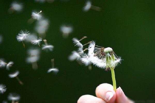 Để gió cuốn đi... để gió cuốn đi....