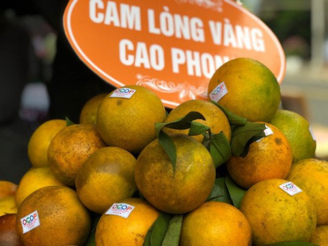 Hòa Bình đưa cam Cao phong lên sàn thương mại điện tử