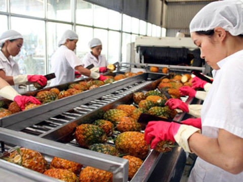 Việt Nam là thị trường cung ứng hàng rau quả chế biến lớn thứ 6 cho Nga