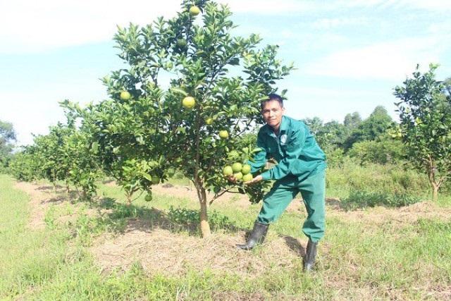 Nghệ An: Hợp tác thúc đẩy tiêu thụ nông sản trên Sàn thương mại điện tử VOSO.VN