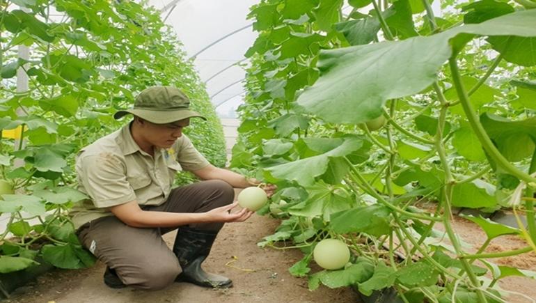 Bình Dương: Ngành sản xuất nông nghiệp gặp không ít khó khăn trong tiêu thụ sản phẩm