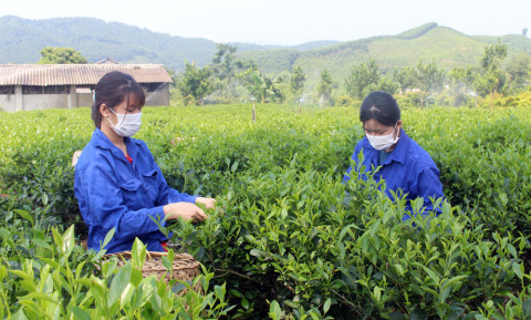 T.P Sông Công (Thái Nguyên): Đề xuất 3 sản phẩm tham gia OCOP cấp tỉnh