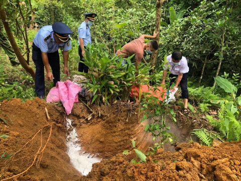 Hà Giang: Tiêu hủy trên 100 tấn lợn nhiễm dịch tả Châu Phi trong 01 tháng