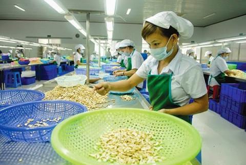 Việt Nam là nhà cung cấp hạt điều số 1 ở Mỹ