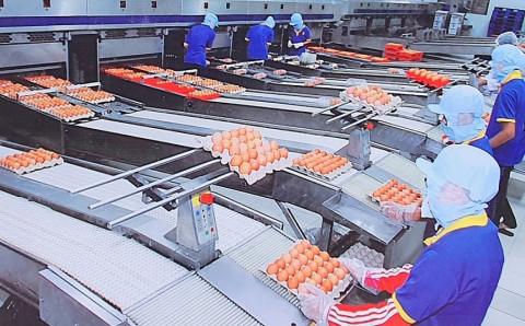 Hoạt động sản xuất doanh nghiệp dần đi vào ổn định