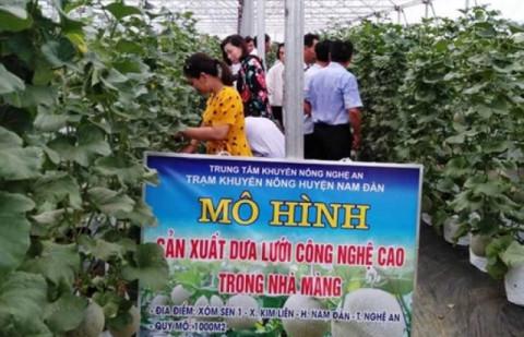 Nam Đàn (Nghệ An): Tạo thuận lợi cho doanh nghiệp liên kết sản xuất với người dân nhằm nâng cao chất lượng, sức cạnh tranh của nông sản
