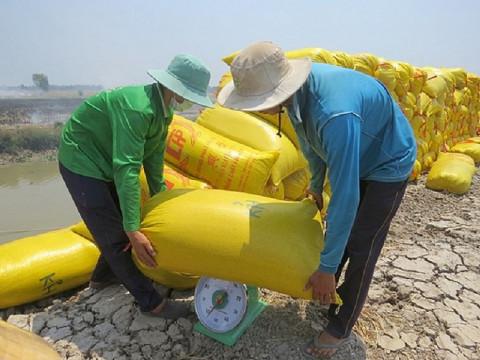 Giá lúa gạo hôm nay 22/10: Giá lúa OM 5451 tăng 100 đồng, giá gạo tăng giảm trái chiều