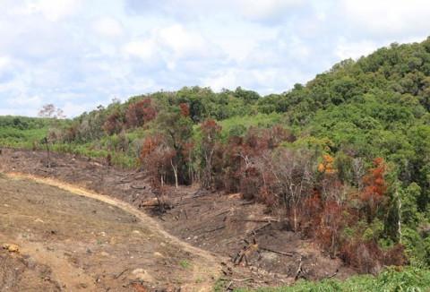 Bình Thuận: Thu hồi 41 ha đất nông nghiệp cho thuê sai quy định