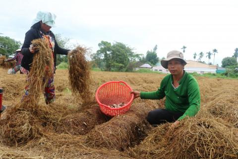 Cần các chính sách thích hợp cần thiết để nâng cao hiệu quả sản phẩm phụ trong nông nghiệp